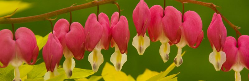 My Bleeding Heart by Jeff Eichinger